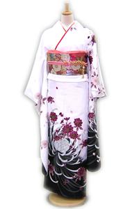 白桜菊_k339
