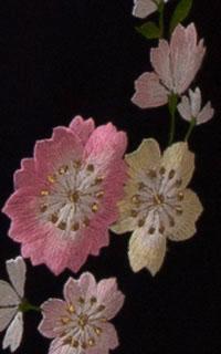 グレーぼかし八重桜