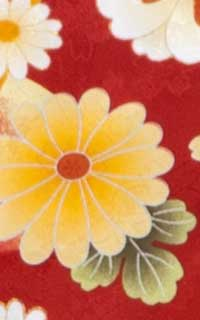 亀甲桜赤(U)