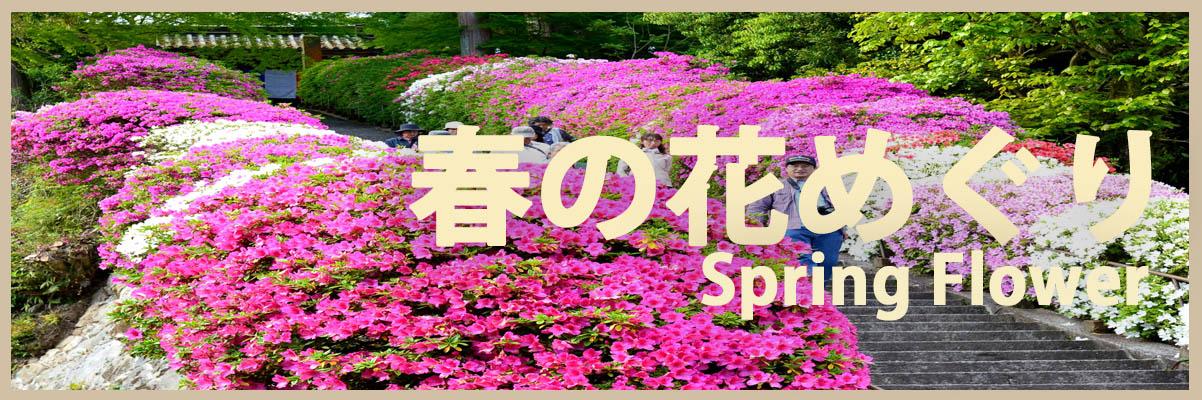 春(3-5月)の花